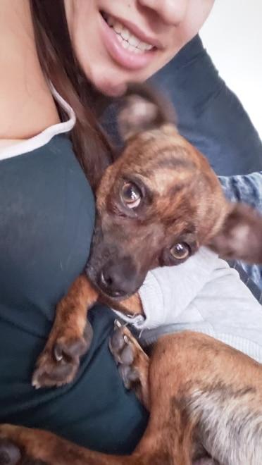 Fashion Dog Hoodies photo review