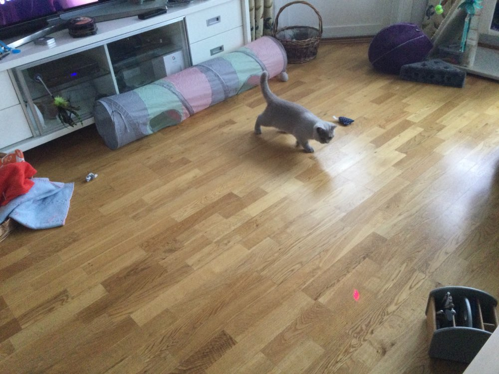 Automatic Cat Laser Toy photo review