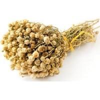 Turkish High quality premıum Peganum harmala   harmal 1 2 3 bunch free shipping Artificial & Dried Flowers     -